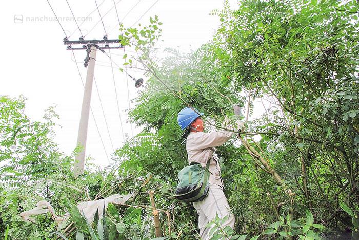 【汇仓村1社,陈明正在砍掉可能碰到电线的树木。】