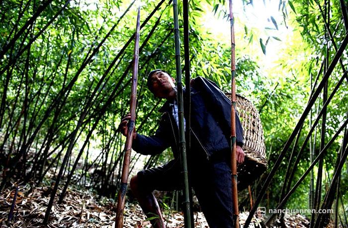 """【王大哥正在查看今年""""竹母""""的长势,笋农不打头笋,才使得金佛山方竹笋得以可持续发展。】"""
