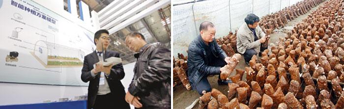 【郑洪远参观云博会(左) | (右)正在指导乡民的郑洪远】
