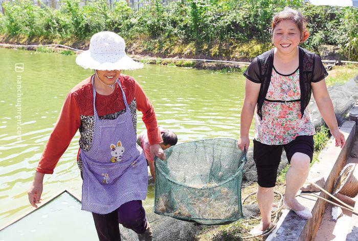 【7月8日,王传淑和工人一起将在自家虾塘里刚捕上来的虾送到厨房。】
