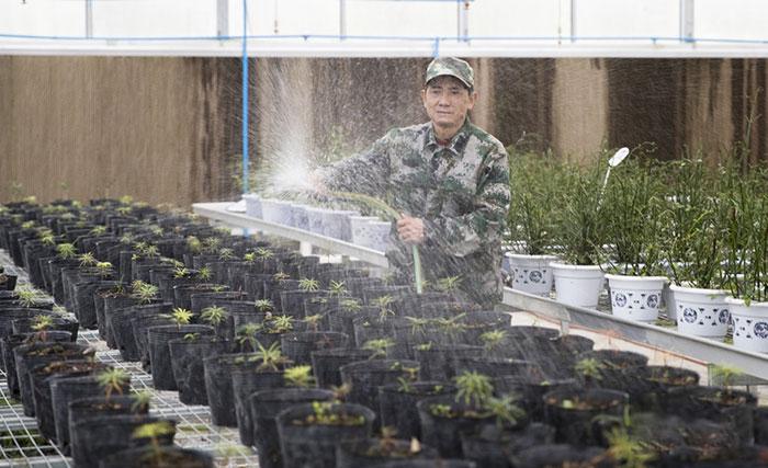 李光禄正在为繁育基地的银杉苗浇水。