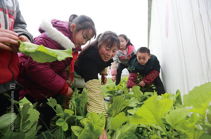 黄先群和孩子们在摘菜准备煮午餐