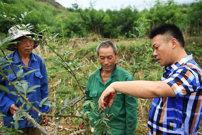 刘毅向当地村民介绍花椒种植技术