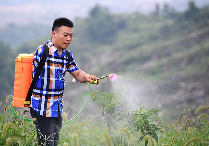 刘毅在花椒种植基地内作业